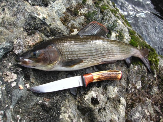 Nordic knife, hand made by Cristi Soimosan